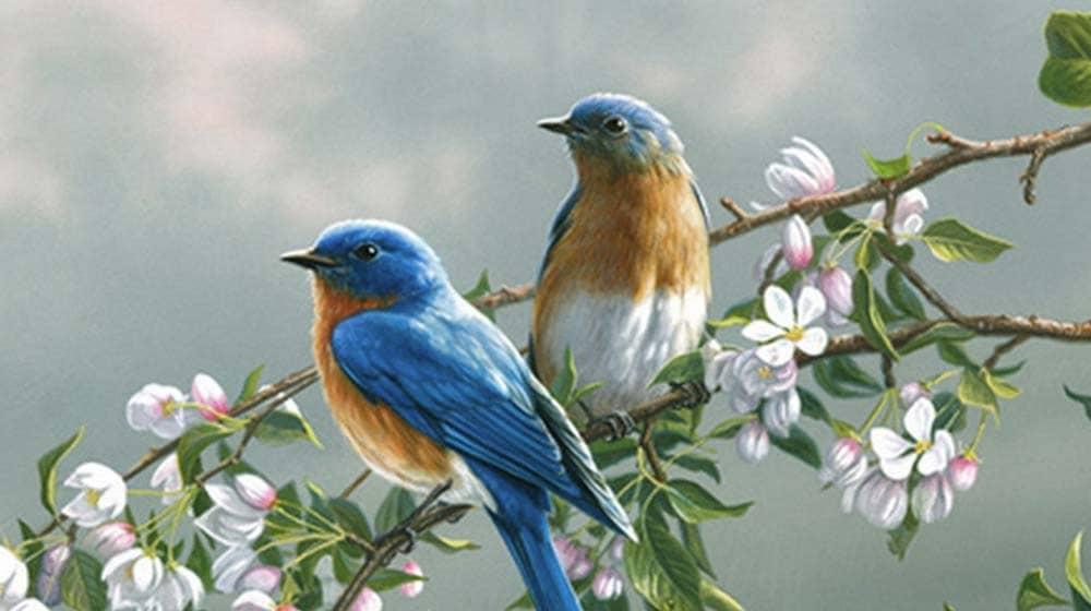 herend rothschild birds
